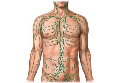 Úvod do lymfologie